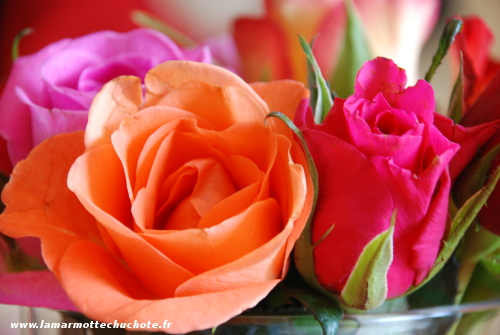 Offrir des fleurs pour la saint valentin bonne ou for Offrir des fleurs