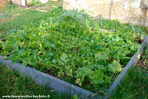 jardin_engrais_verts